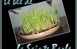 La tradition du blé de la sainte Barbe