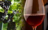 Effondrement de la production européenne de vin