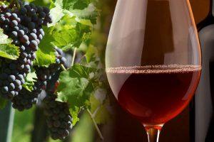Production de vin catastrophique pour 2017