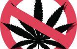 Le Cannabis légalisé au Mexique: les vraies priorités du pays à la poubelle