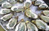 Huîtres au plastique