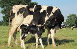 Une chorale de Paysans chante sa détresse face à la déshumanisation de l'agriculture – Emouvant!