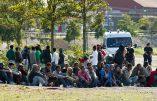 Des trafiquants albanais empochent 9.800 euros par personne pour faire passer des immigrés clandestins de France en Angleterre