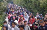 Mur anti-migrant au Sahara? Une idée de Trump