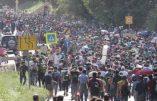 Allemagne : le vrai visage des « migrants »