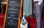 «Chiens autorisés, banquiers interdits» : le restaurateur en colère explique sa démarche