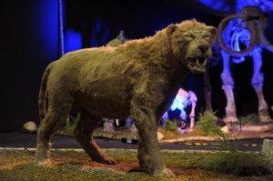 Lion3-482266