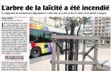 A Angers, «l'arbre de la laïcité» trépasse pour la quatrième fois