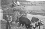 La vie d'autrefois dans une ferme française