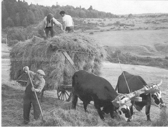 La vie d autrefois dans une ferme fran aise medias - La halte d autrefois ...