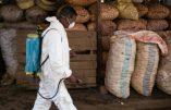 La peste est de retour à Madagascar : un Français parmi les cent premiers morts