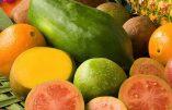 Les fruits tropicaux dopent l'économie des pays du Tiers-monde