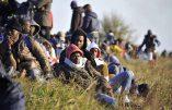 La plupart des « réfugiés » sont musulmans