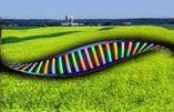 Un monde d'OGM