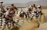 Réduire la criminalité ? Les recettes du shérif Joe Arpaio