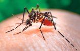 Le virus «Zika»  pour promouvoir l'avortement ?