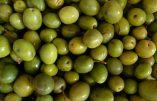 Les aides de l'Union Européenne à l'huile d'olive de Tunisie : une traîtrise