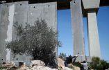 La construction du mur israélien à Crémisan, en Palestine, continue dans une indifférence quasi-générale. La condamnation du patriarche de Jérusalem