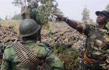 43 civils tués par des musulmans ougandais à Beni en 4 jours en République Démocratique du Congo