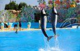 GPA, PMA, adoption par les couples homosexuels et interdiction de la reproduction naturelle des orques et des dauphins dans les parcs aquatiques