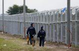 L'indiscutable efficacité des clôtures anti-migrants aux frontières de la Hongrie