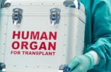 L'Egypte, l'Arabie Saoudite, la Turquie et Israël mêlés à un trafic d'organes prélevés sur des migrants