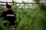 Canada – Une église transformée en centre de production de cannabis