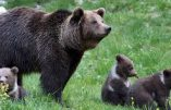 Une Europe d'ours