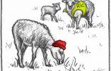 Un berger qui a tout compris sur le coronavirus, le confinement, le vaccin…