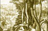 Dimanche 23 août 2020 – XII° dimanche après la Pentecôte – Saint Philippe Beniti, Confesseur- Bienheureux Bernard d'Offida, Frère Lai capucin
