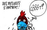 Ignace - Poulet brésilien infecté par le coronavirus