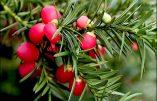 Les premiers fruits empoisonnés de Traditionis custodes